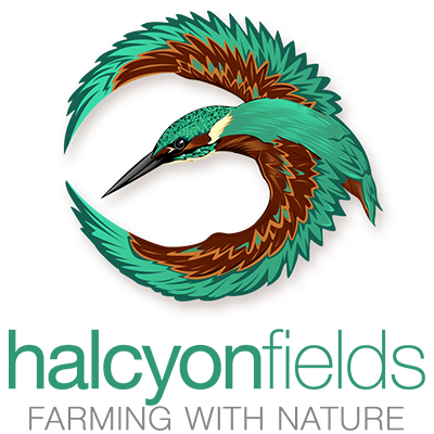 logo-design-halcyon-fields